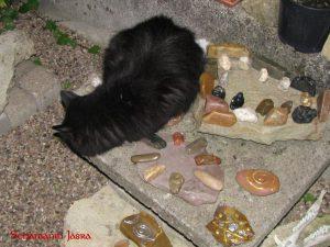 Vollmond Ritual